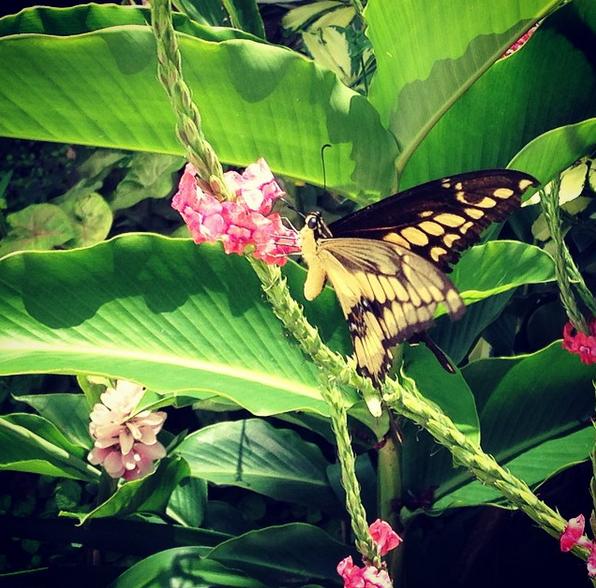 The-Retreat-Butterly-Garden